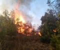 40 военнослужещи от Сухопътните войски оказват помощ при гасенето на пожара в Свиленградско