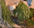 Окръжна прокуратура – Стара Загора привлече като обвиняеми шестима мъже за държане на 79,5 кг марихуана с цел разпространение