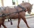 Откраднаха 12 комплекта амуниции за коне в с. Загоре