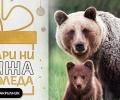 WWF стартира кампания за опазване на мечките в България