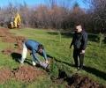 Старозагорци започнаха засаждането на живи коледни дръвчета