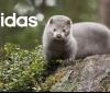 """Adidas каза """"не"""" на кожите с косъм"""
