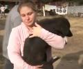Мъглижанин влиза в затвора за 8 месеца за проявена жестокост към куче