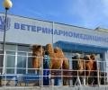 Уникална операция на камила извършиха ветеринарни хирурзи от Тракийския университет