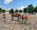 Конната база на Тракийския университет има нужда от доброволци, награда за труда ще е безплатна езда