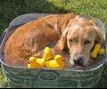 Спешно предупреждение във връзка с горещините: беззащитни животни в смъртна опасност