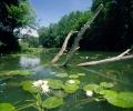 WWF с призив към МОСВ да оттегли предложения, застрашаващи реките
