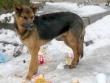 Община Стара Загора ще извърши преброяване на бездомните кучета