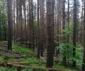 Климатичните промени излагат на риск нашите гори